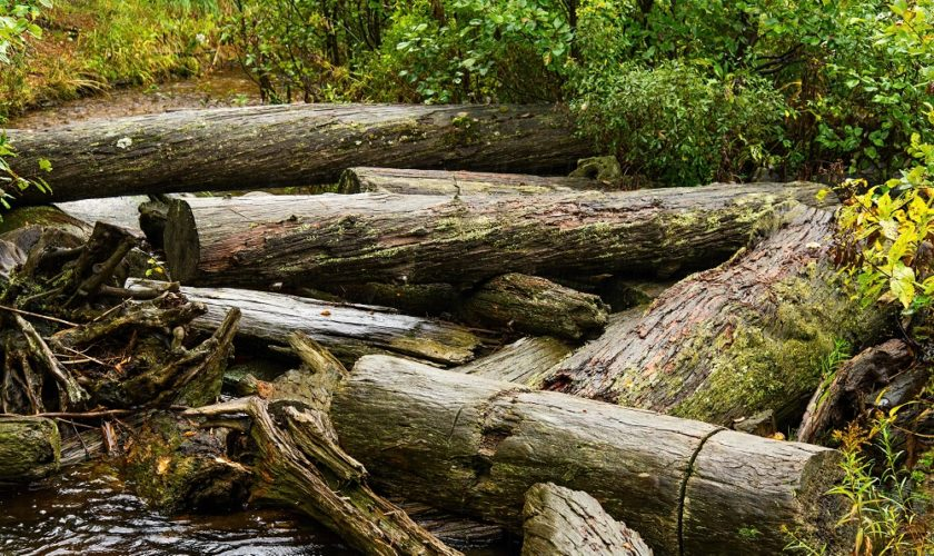 Log jam in a small creek